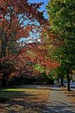 Main Street Autumn, Murfreesboro
