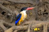 Birding in Goa,India