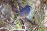 Birding in the Canary Islands