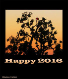 happy 2016.jpg