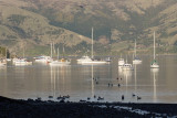 Akaroa Harbour early morning light ooc