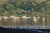 Akaroa Harbour early morning light using Viveza