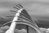 Walkway Bridge, New Plymouth