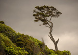 15 December 2013 - Catlans Coast