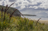 On the way to the Cathedral Caves, Catlins