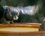 tui on a feeder