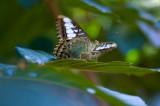 Butterfly at Butterfly Farm, Khao Lak
