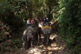 Elephant riding in Khao Sok