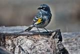 Alaskan Birding Adventure