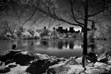 A Folk of Central Park