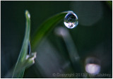Trees in a drop.