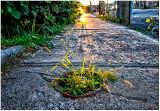 Urban planter.