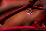 Red rain (Peter Gabriel).