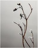 Zen frost.