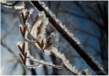 Light hoar frost.