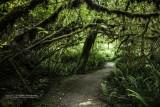 Under the Redwoods