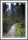 Cape Scott Provincial Park 2013