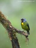 Ecuador birds