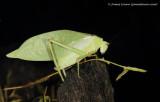 Ecuador bugs