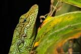 *NEW* Ecuador wildlife
