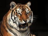 Austin Zoo and Sanctuary Visit - March, 2016