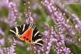 Moths - Caterpillars