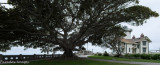 Point Fermin Lighthouse and Tree