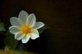 784. Blooming