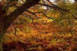 807. Autumn