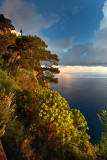 Early morning from the ancient stair  from Capri to Anacapri, Villa Axel Munthe in the background.