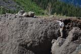 Landslide Splash Debris(DemingGl_080713-173-13.jpg)