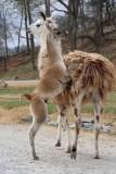 Virginia Safari Park 2014