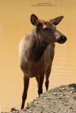 Virginia Safari Park 2015