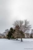 Oak Ridge Park, NJ In The Snow 85796
