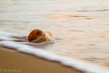 Coconut In The Surf 117776