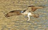 Ft. Myers, Florida Birds, 10-2014