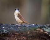 2016 Great Backyard Bird Count - My Backyard Birds