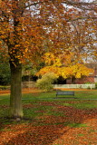 Autumn Trees, Cottingham IMG_0054.jpg