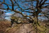 Brimham Rocks IMG_4922.jpg