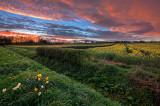 Eppleworth fields sunset IMG_4431.jpg