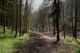 Millington Wood IMG_0725p.jpg
