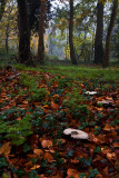 Dene Wood autumn IMG_7019.jpg