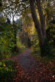 Dene Wood autumn IMG_7022.jpg