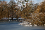 Winter Pond IMG_8982.jpg