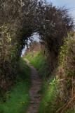 Pembrokeshire coast IMG_0327.jpg