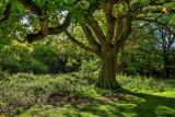 Beverley Westwood IMG_1513-2.jpg