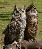 Skidby Owls-2889.jpg