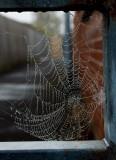 Urban web IMG_6973.jpg