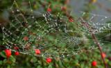 web and berries IMG_6976.jpg