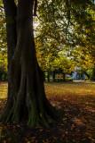 Cottingham IMG_7711.jpg